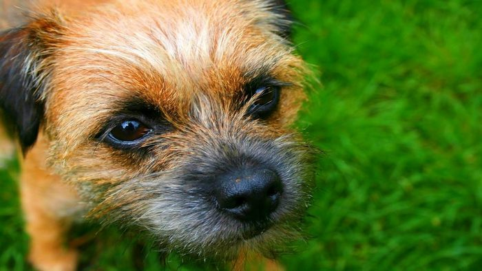 Dog Breeds that Are Excellent for Allergic Owners
