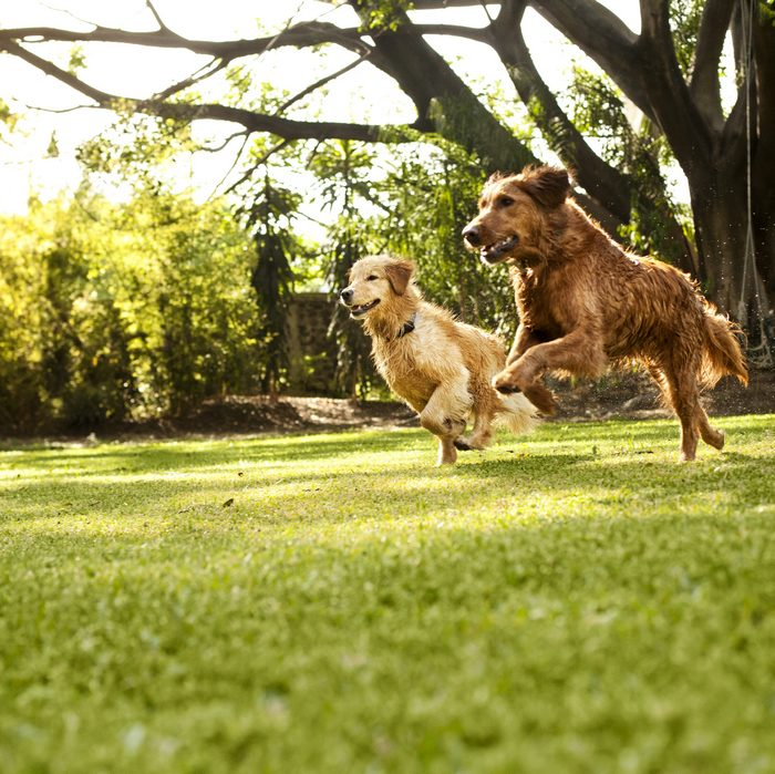 Highly Trainable Dog Breeds